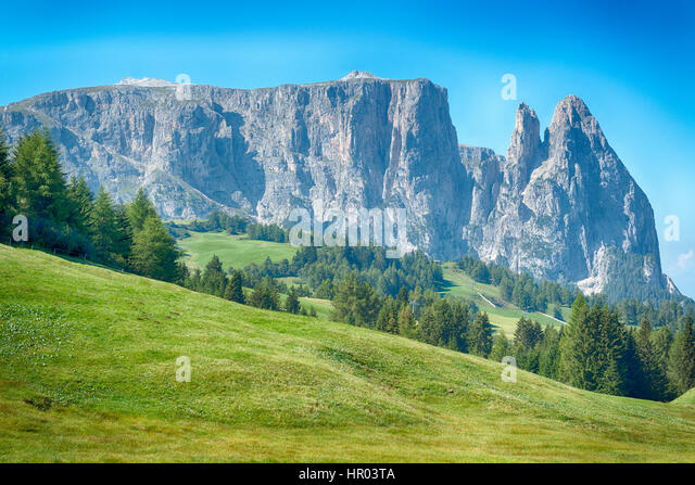 beautiful viwe oh the Seiser Alm in summer season with meadow in foreground, Dolomites - Stock Image