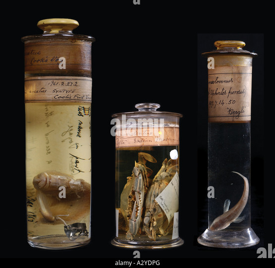 Historical specimens from left to right - Stock Image