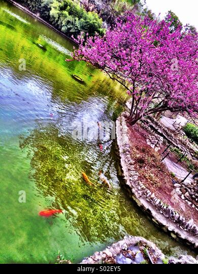 Japanese Tea Garden, San Antonio - Stock Image