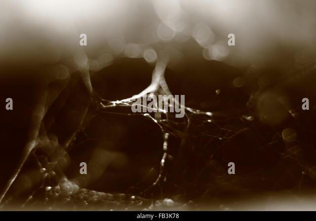 abstract sepia tone blurry macro background of cobweb. - Stock Image