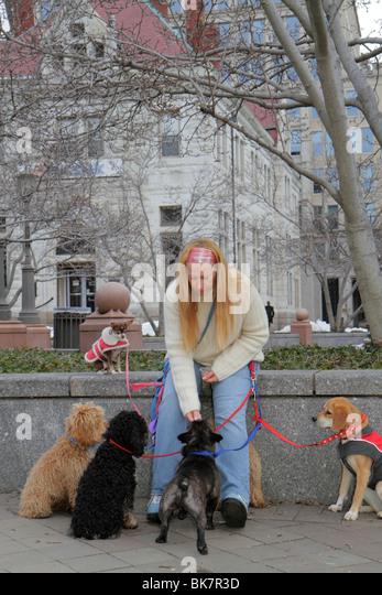 Washington DC 7th Street Northwest woman animal dog walker job dog pet leash coat feed treat obedience - Stock Image