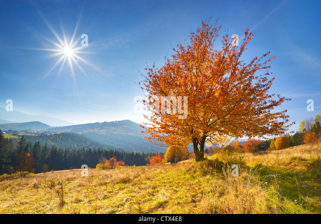 Autumn scene in Beskid Mountains, Poland - Stock Image