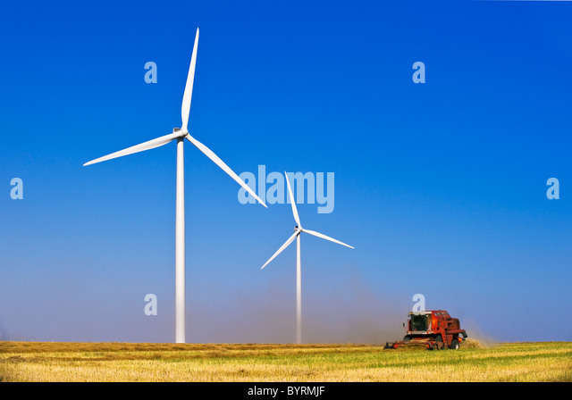 Agriculture - Wind turbines stand above a combine harvesting swathed canola (rapeseed) / near St. Leon, Manitoba, - Stock Image