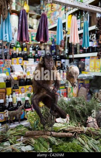 Peru, Chiclayo, Witchcraft, Shaman market. Spider monkey. - Stock Image