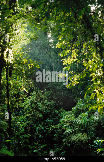 Beginning of tropical rainstorm in rainforest in Choco Department Colombia - Stock Image