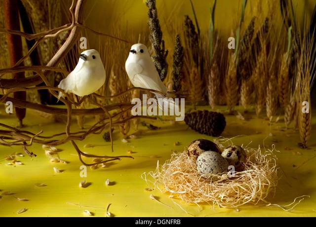 Quail eggs still life - Stock-Bilder