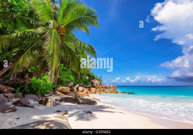 Praslin tropical beach with palm trees and rocks, Seychelles - Stock Image