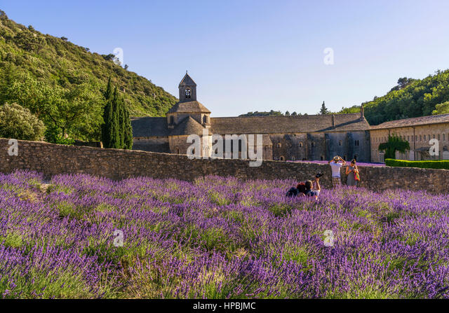 lavender field in front of the Abbaye de Senanque, near Gordes, the Vaucluse, Provence, France - Stock Image