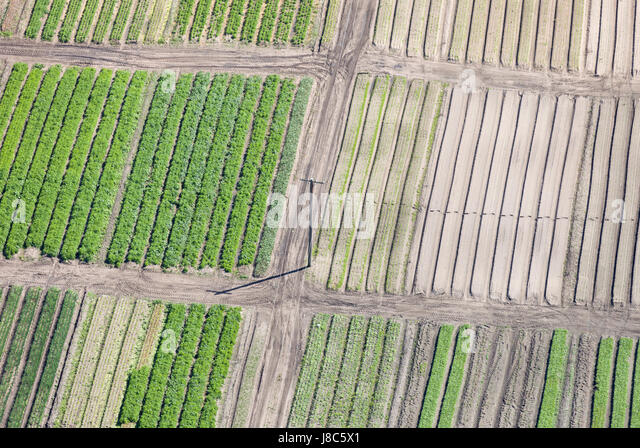 Harvesting crops,Aerial view. - Stock Image