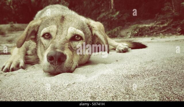 Lazy dog - Stock Image