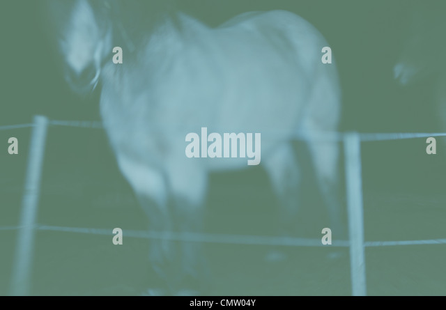 Horse stands beside barbed wire fence in paddock - Stock Image