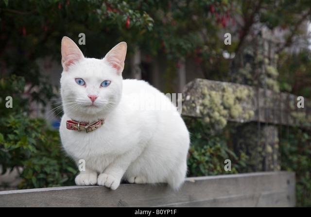 Cat, portrait - Stock Image