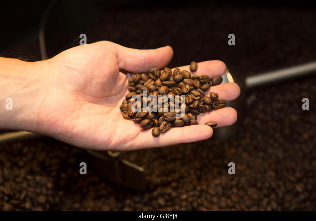 Malton, North Yorkshire, UK. 13th Aug, 2016. David Elkington demostrates how to roast coffee at Roost Coffee and - Stock Image