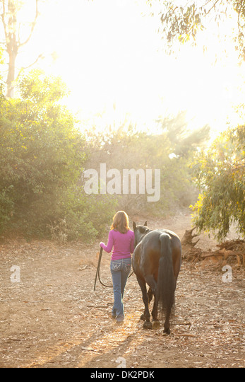 Brunette woman in purple sweater leading brown horse on sunny path at sunset - Stock Image