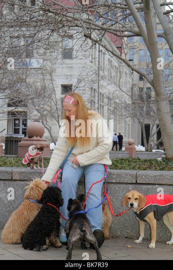 Washington DC 7th Street Northwest woman animal dog walker job dog pet leash coat obedience - Stock Image