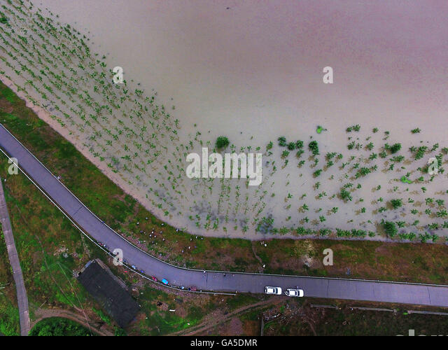 Anxiang, China's Hunan Province. 3rd July, 2016. Protective forest belt along the dike of Songzi River is inundated - Stock Image