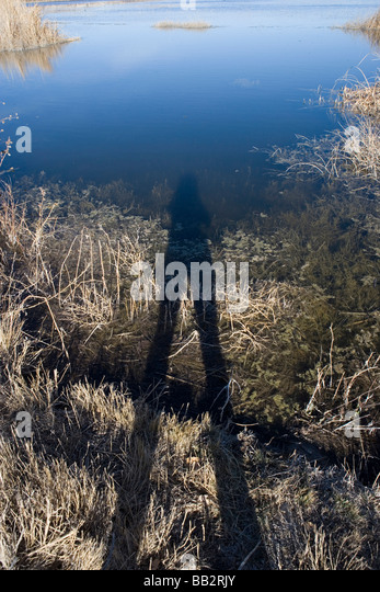 shadow of human figure reflected in pond water - Stock Image