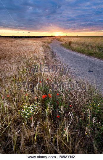 Wildflowers on the path to South Foreland lighthouse, near Dover, Kent, England. - Stock Image