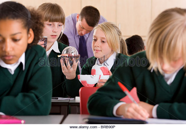 Students working with biology model in classroom - Stock Image