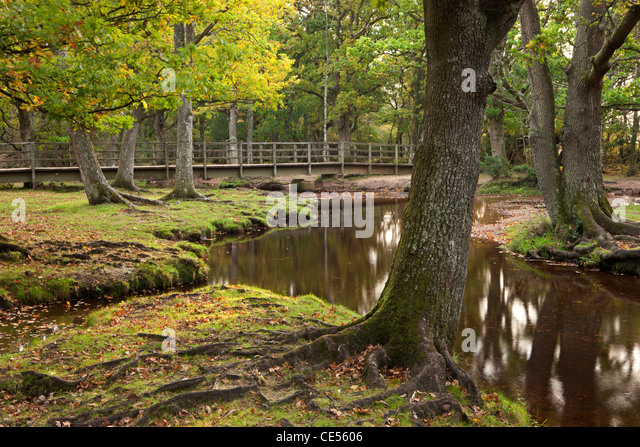 Ober Water flowing through autumnal trees at Puttles Bridge, New Forest, Hampshire, England. Autumn (October) 2011. - Stock Image