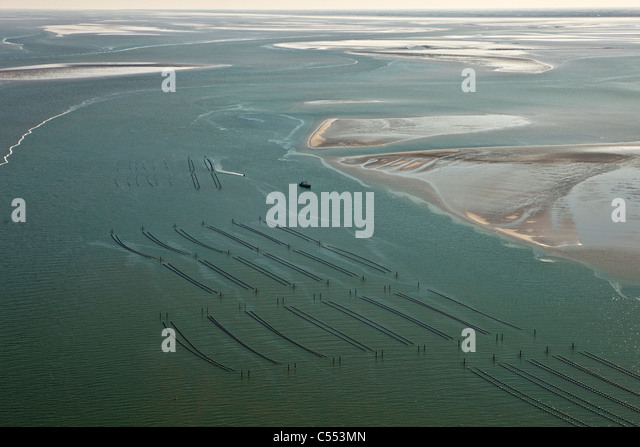 The Netherlands, Island Terschelling, group of islands called Wadden Sea. Mussel culture. Aerial. - Stock Image
