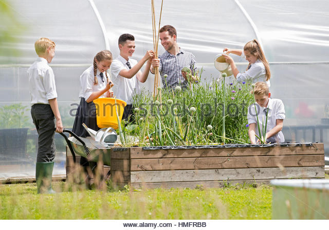 Teacher and middle school students learning gardening in sunny garden outside greenhouse - Stock-Bilder