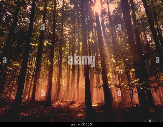 Sunset in the woods - Stock-Bilder