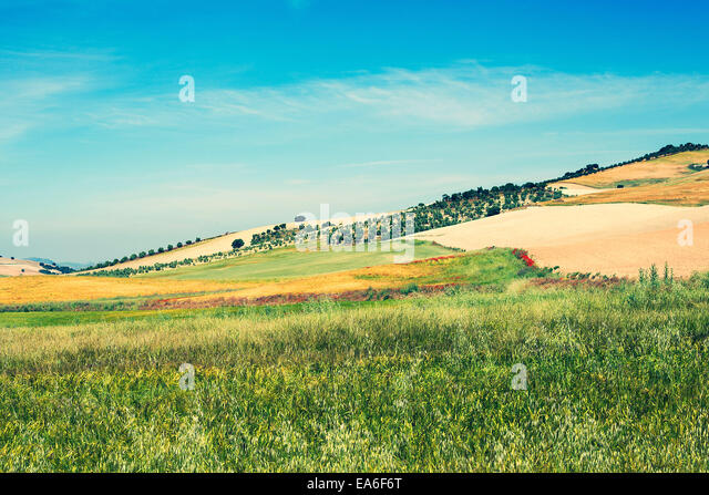 Spain, Campo, Green and yellow fields on hillside - Stock Image