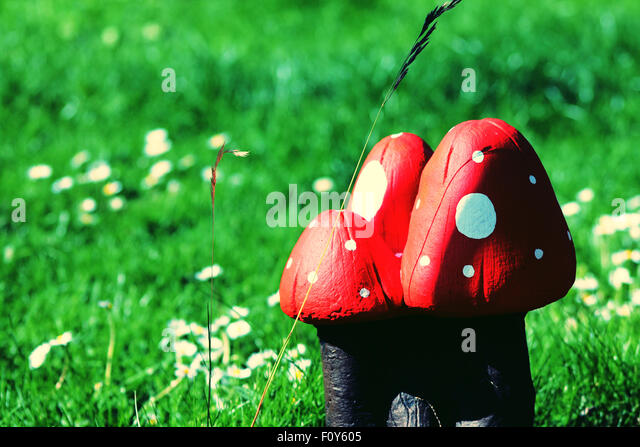 Garden mushrooms - Stock Image