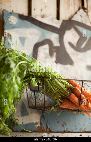 Fresh carrots in a wire basket - Stock Image