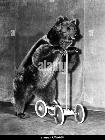 Circus bear from 1942.. Courtesy: CSU Archives / Everett Collection - Stock Image