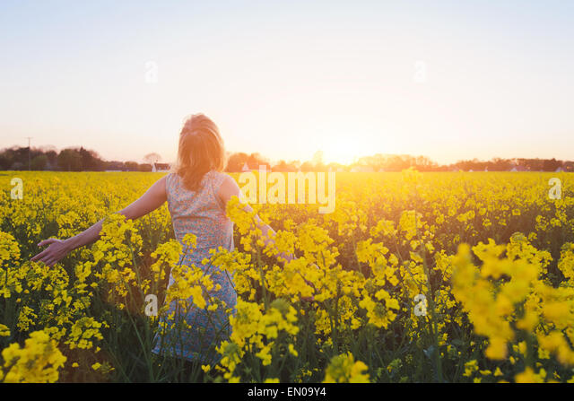 happy young woman enjoying summer in yellow field at sunset - Stock Image
