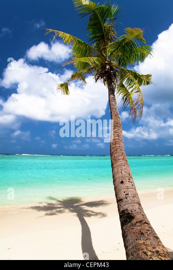 Palm tree trunk and summer view - Stock Image