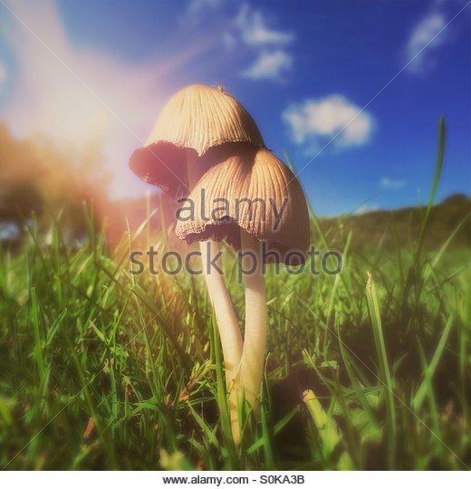 Garden Toadstools - Stock Image