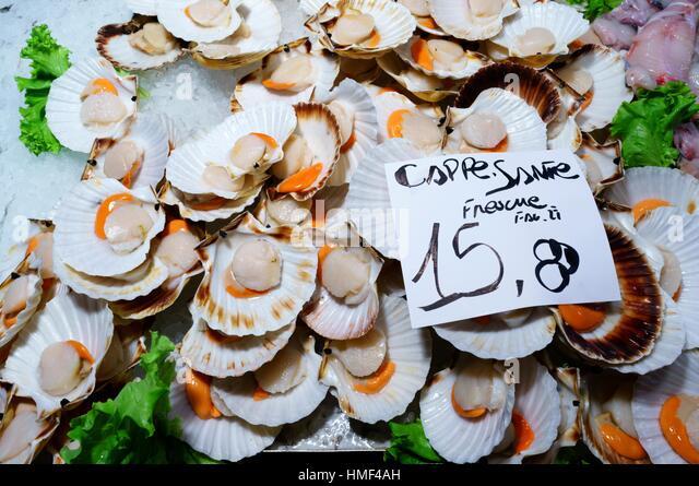 Fresh scallops for sale at Rialto Fish Market. Venice, Italy - Stock Image