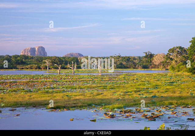 Lake and view of Elephant Rock in late afternoon, Yala National Park, Sri Lanka, Asia - Stock Image