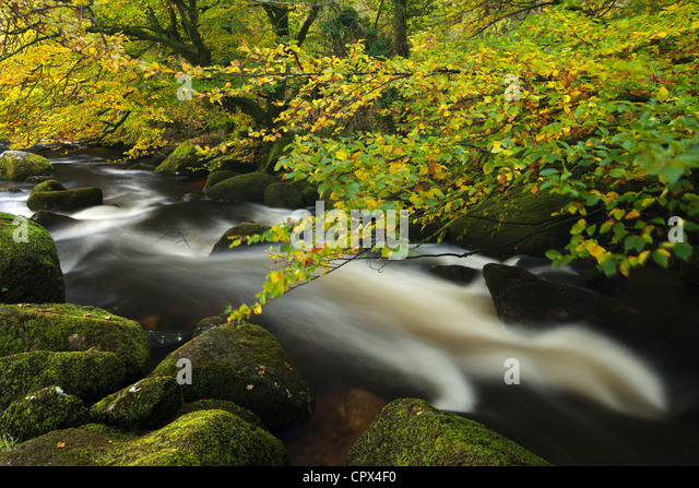autumn colours along the East Dart River, Dartmoor, Devon, England - Stock Image