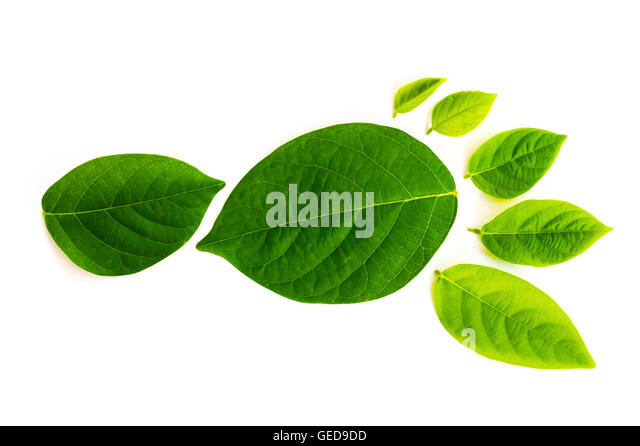 The carbon footprint is a measure of the impact our activities have on the environment, and in particular climate - Stock Image