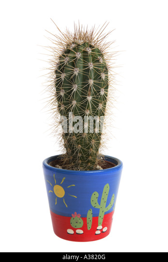 how to cut a sick cactus