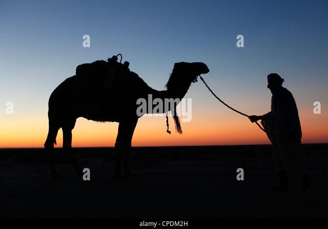 Camel driver at dusk in the Sahara desert, near Douz, Kebili, Tunisia, North Africa, Africa - Stock Image