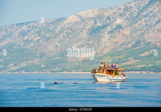 Dolphin watching boat trip off Brac Island, Dalmatian Coast, Adriatic, Croatia - Stock Image