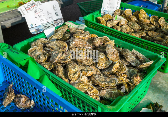 Fresh Atlantic Oysters on sale. - Stock Image