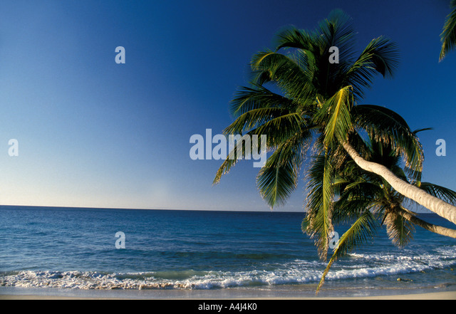 Tropics palm tree overlooking beach - Stock Image