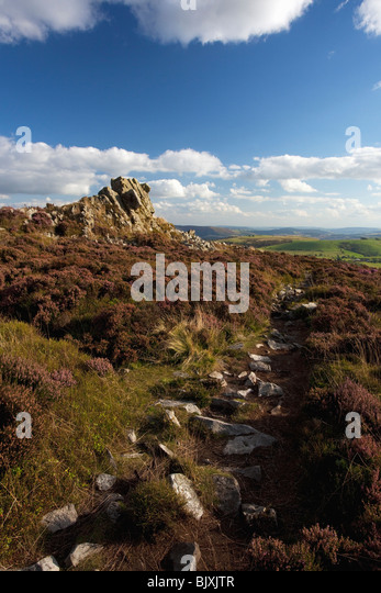 Stiperstones purple heather summer day blue sky sunshine near Bishops Castle Shropshire Borders England Great Britain - Stock-Bilder