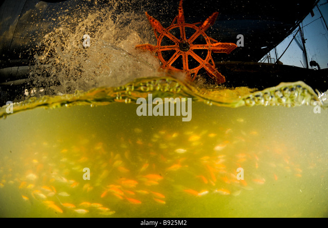 Industrial livestock farming stock photos industrial for Koi 9 en israel