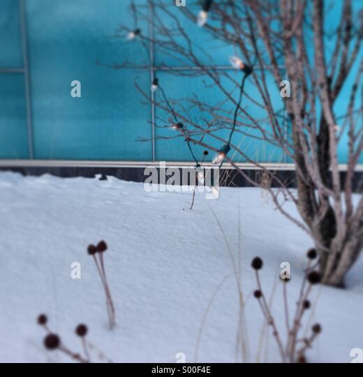 Winter scene, snow, holiday Christmas lights. - Stock-Bilder
