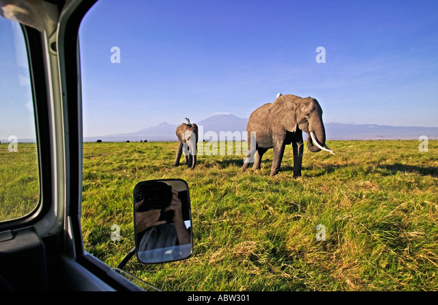 Tourism Looking out of car window at elephants Amboseli National Park Kenya - Stock-Bilder