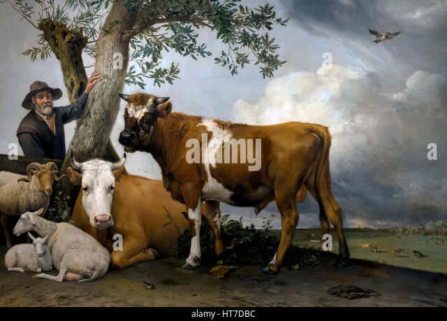 The Bull, by Paulus Potter, 1647,Royal Art Gallery, Mauritshuis Museum, The Hague, Netherlands, Europe - Stock Image