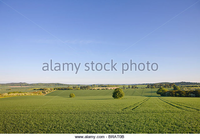 Blue sky over tranquil countryside farmland - Stock Image
