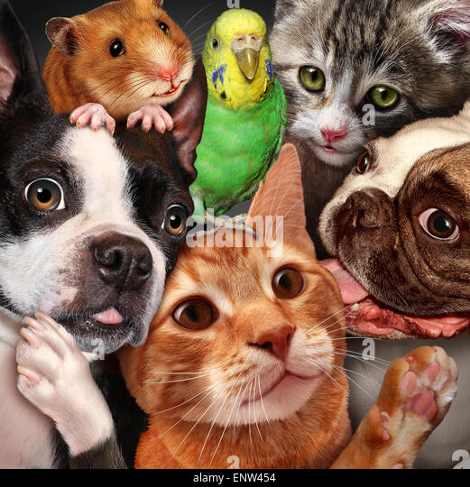 Pet group concept as dogs cats a hamster and budgie gathered together as a symbol for veterinary care and support - Stock-Bilder